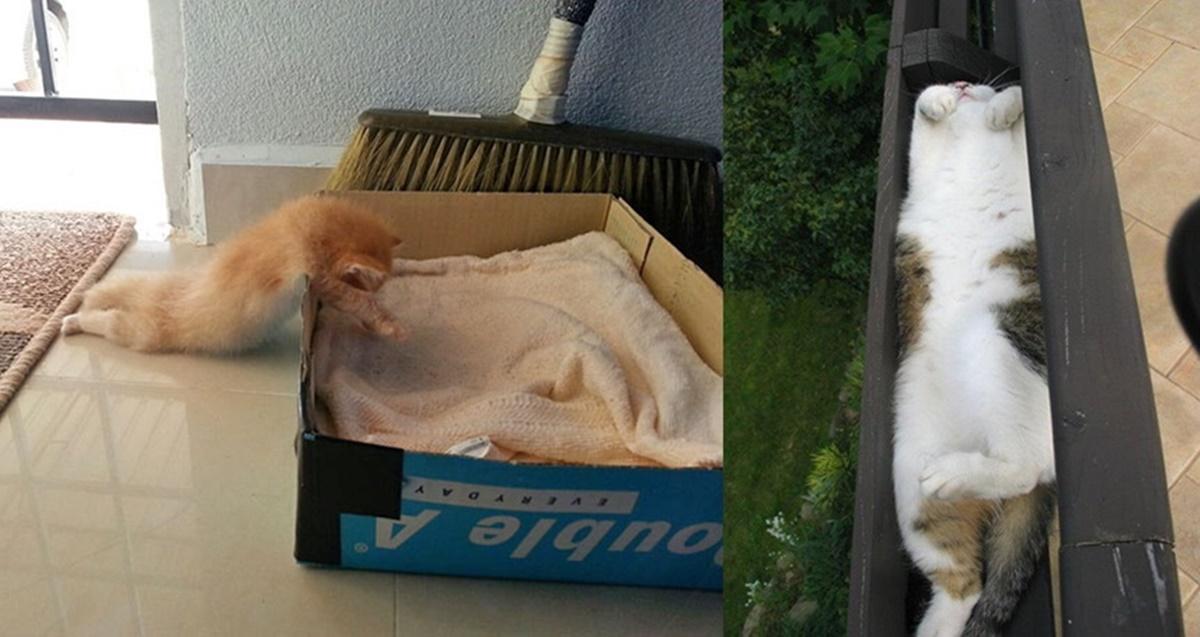 sleeping-cats-211-57d2c7256152e__605-horz