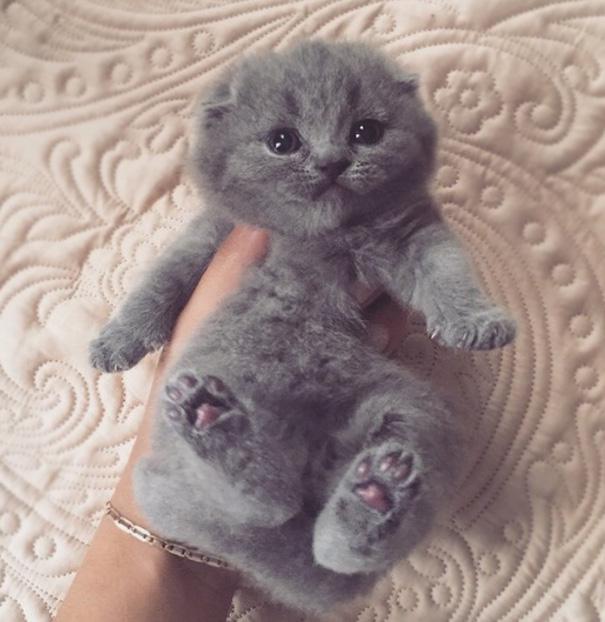 捕まった感がすごい子猫