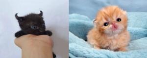 cute-kittens-11-57b30aa95f3c6__605-horz