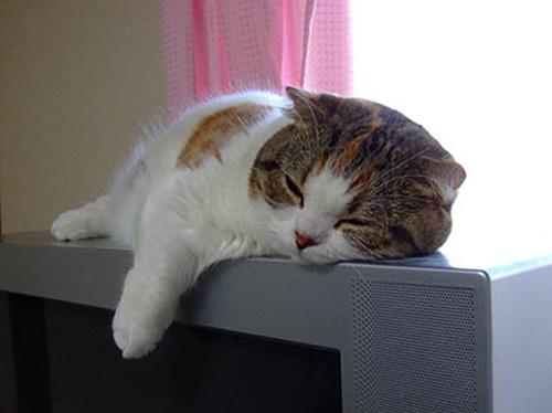 熟睡フチ猫。