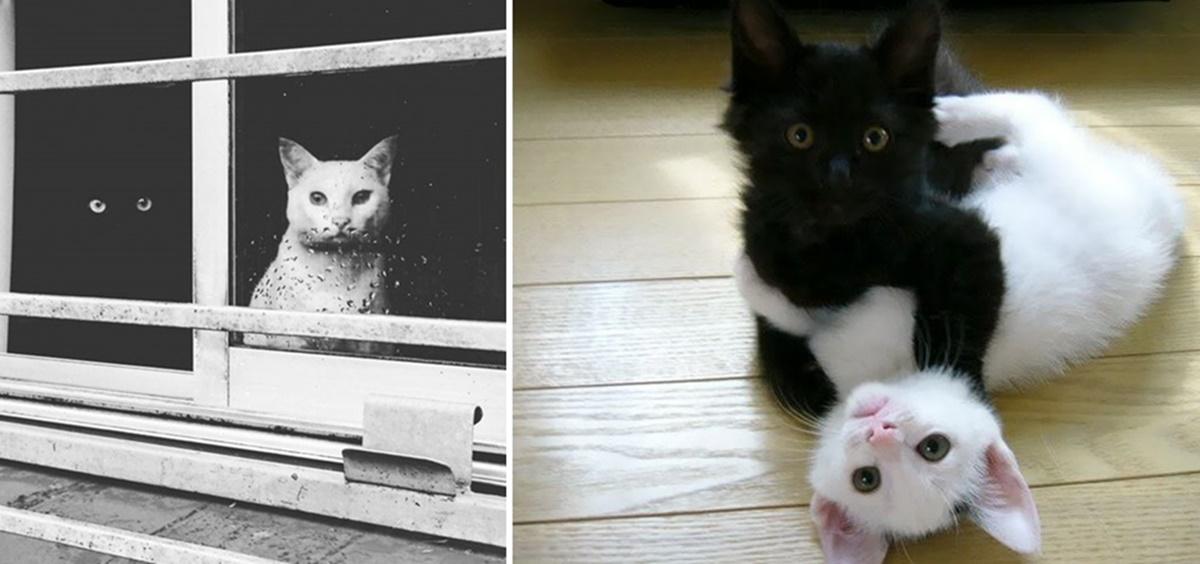 black-white-cats-yin-yang-1-58243d529fdf3__605-horz