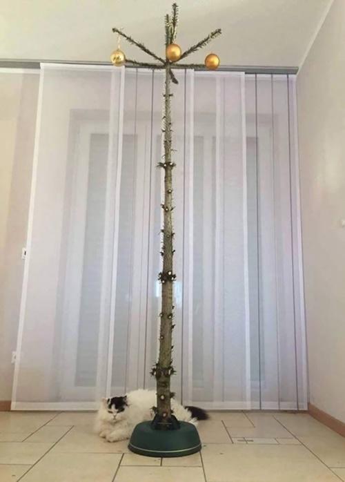 裸状態のツリー