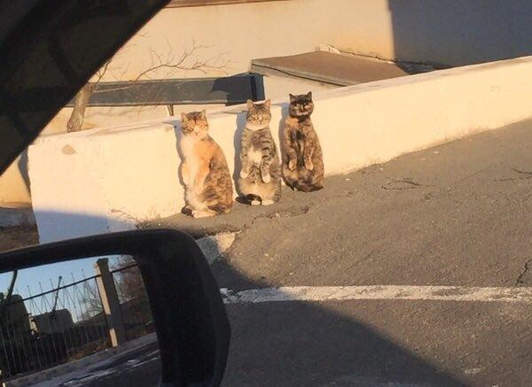 奇跡的に振り向く3匹の猫達