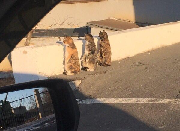 奇跡的に立つ3匹の猫